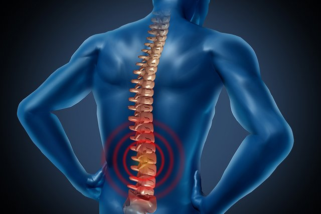 Illustration of the spine.